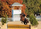 741 Applications for Thoroughbred Makeover