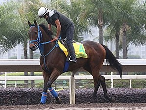 Mongolian Saturday at Sha Tin the morning of Dec. 10