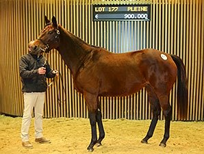 Malones Continue Spending For Mares Bloodhorse