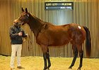 Embellishment, an unraced Galileo -- Sophisticat mare in foal to Kingman, brought €900,000.
