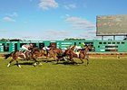 Tampa Bay Downs racing