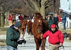Keeneland Catalogs 1,796 for January Sale