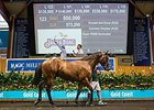 Magic Millions Sale Begins With Gains