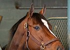 Champion Untapable to be bred to Frankel