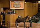 Ready for Romance brought $240,000 to top the Keeneland January mixed sale's third session.