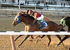 "Sassicaia gets his head in front to win the Toboggan Stakes.<br><a target=""blank"" href=""http://photos.bloodhorse.com/AtTheRaces-1/At-the-Races-2016/i-LDdtCv6"">Order This Photo</a>"