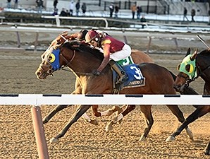 Sassicaia gets his head in front to win the Toboggan Stakes.