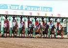 Turf Paradise Lifts EHV-1 Quarantine