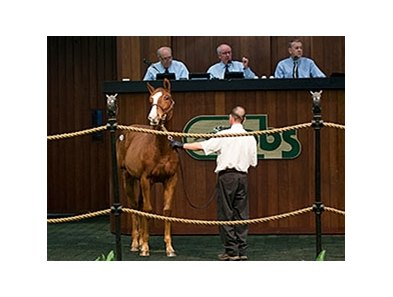 Hip 234 by Scat Daddy sold for $105,000