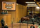 Prom Time, Hip 1271, sold for $102,000.