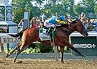 "Triple Crown winner American Pharoah<br><a target=""blank"" href=""http://photos.bloodhorse.com/TripleCrown/2015-Triple-Crown/Belmont-Stakes-147/i-prWMjgg"">Order This Photo</a>"