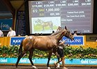 Magic Millions Book 1 Ends With Records