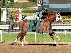 California Chrome worked six furlongs in 1:10.06 at Santa Anita on January 2, 2016.