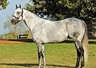 Exchange Rate, $1.4 million yearling, sire of 68 stakes winners