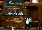 Hip 53, a colt by Curlin, brought $150,000.