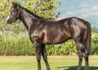Lot 37, a colt by Silvano, brought 6 million rand (US$363,909).