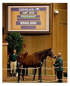 Roan Inish brought $500,000 during  the second session of Keeneland's January horses of all ages sale.