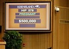 Roan Inish Brings $500,000 at Keeneland