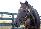 Champion Sprinter Gulch Euthanized at Age 32