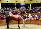 Frankel Colt Tops New Zealand Yearling Sale
