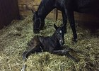 Atreides' first foal, a filly of the unraced Scat Daddy mare Melody's Spirit.