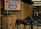 Veracity, a 5-year-old Distorted Humor mare offered as a broodmare prospect, was purchased for $460,000.