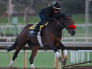 Nyquist works at Santa Anita Jan. 24.