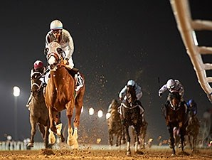 California Chrome wins his Dubai World Cup prep at Meydan without being asked for his best