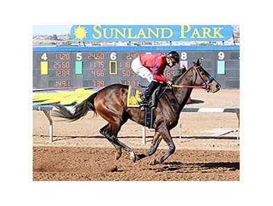 K P Wildcat won the Island Fashion by 7 3/4 lengths.