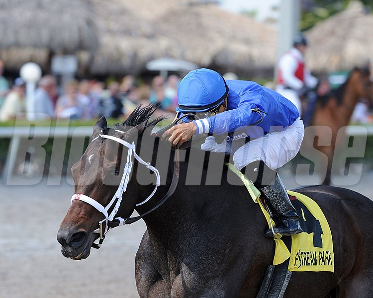 Godolphin Racing's Penwith finally broke through to her first graded score Feb. 13, when she took the $200,000 Royal Delta Stakes (gr. II) at Gulfstream Park by three lengths.