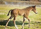 2016 filly by Strong Mandate out of Secret Glade, by Hennessy