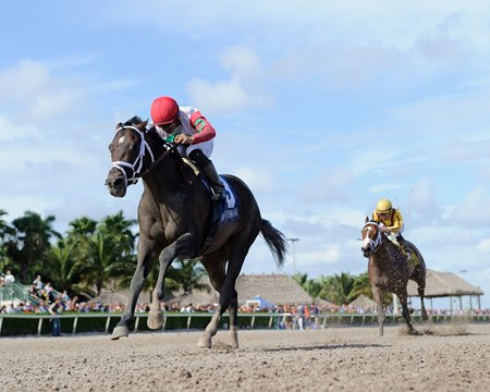 Tommy Macho wins the 2016 Fred W. Hooper Stakes