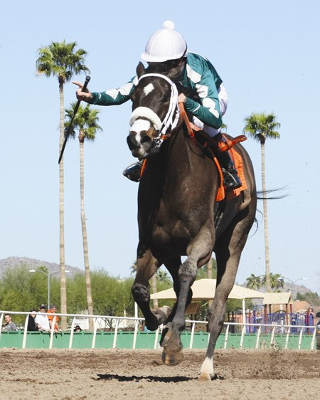 Protective Shield deflects her opponents in the  Arizona Oaks at Turf Paradise.