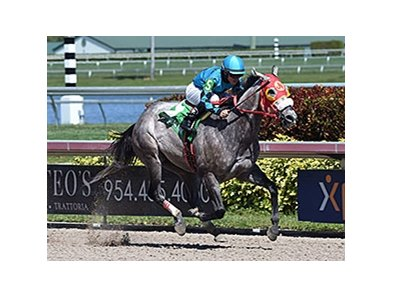"X Y Jet delivers another victory in the Gulfstream Park Sprint Stakes.<br><a target=""blank"" href=""http://photos.bloodhorse.com/AtTheRaces-1/At-the-Races-2016/i-w9MGWVQ"">Order This Photo</a>"