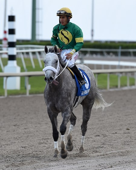 Stonetastic wins the Miami Shores Handicap at Gulfstream Park Feb. 14