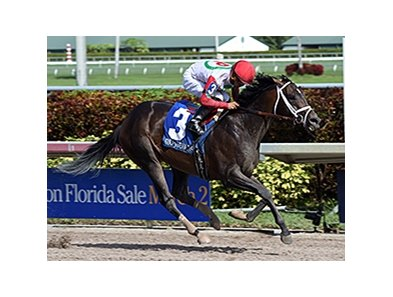 "Tommy Macho comes home strong to win the Fred W. Hooper Stakes.<br><a target=""blank"" href=""http://photos.bloodhorse.com/AtTheRaces-1/At-the-Races-2016/i-jLMqcz7"">Order This Photo</a>"