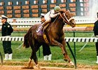 Champion Timber Country Dies at Age 24