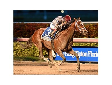 "Mshawish comes home a winner in the Donn Handicap.<br><a target=""blank"" href=""http://photos.bloodhorse.com/AtTheRaces-1/At-the-Races-2016/i-v9zkHXV"">Order This Photo</a>"