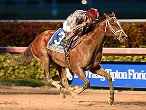Mshawish comes home a winner in the Donn Handicap.