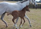 Filly is First Reported Foal for Mark Valeski