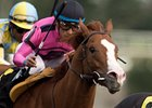 Kasseopia finished second in the Grey Stakes at Woodbine in October.