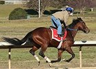 Discreetness working at Oaklawn Park Feb. 10.