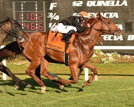 Reload wins the Tampa Bay Stakes Feb. 13, 2016.