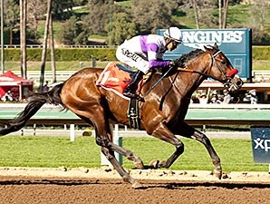 Nyquist, champion 2-year-old male of 2015, remained undefeated in six starts with his San Vicente victory Feb. 15 at Santa Anita Park