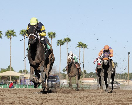 Nightly News leaves the rest of the field behind in the Turf Paradise Derby at Turf Paradise in Phoenix, Arizona.