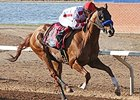Collected wins the Sunland Park Festival of Racing Stakes.