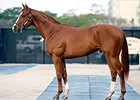 Curlin Colt Second to Bring $1M at F-T Sale