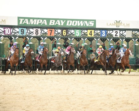 Start of the Tampa Bay Derby!