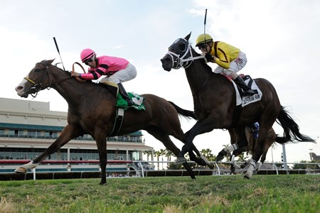 Miss Matzoball is crowned the victor in the Captiva Island Handicap at Gulfstream Park.
