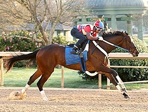 Untapable works at Oaklawn Park March 7.